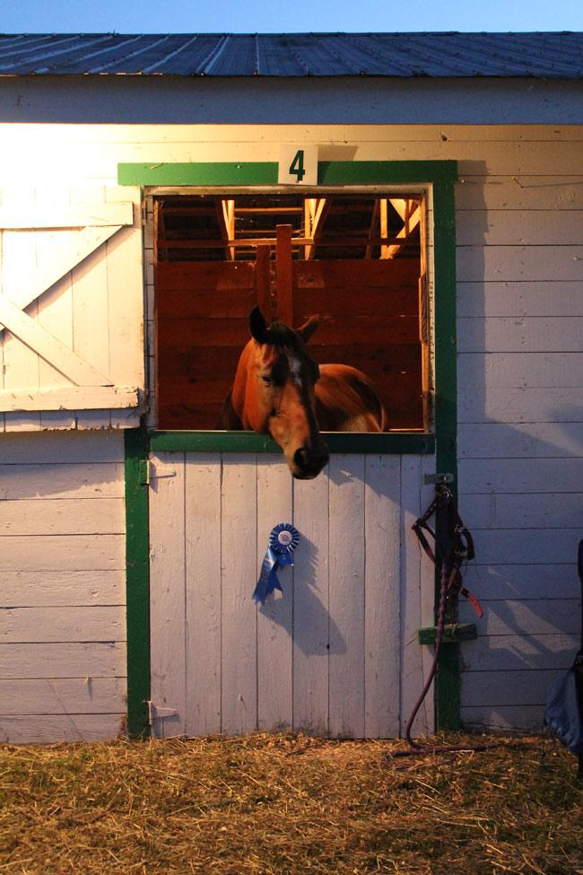 evening-horse