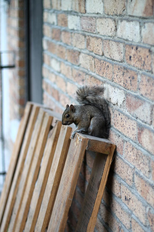 squirrel sitting on wooden pallet